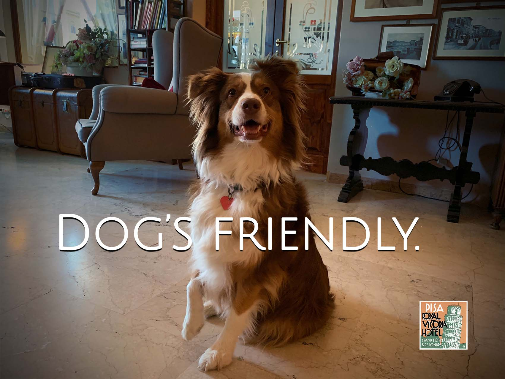 HOME dog's friendly